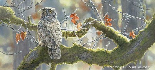 Nature artist Susan Bourdet