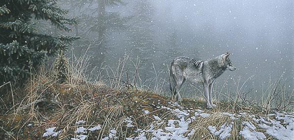 Silent Snows By Stephen Lyman